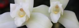 thumb_patria-monja-blanca
